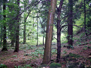 Trees in Woodchester park