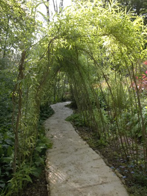 A willow tunnel