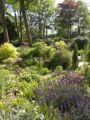 General view of the garden